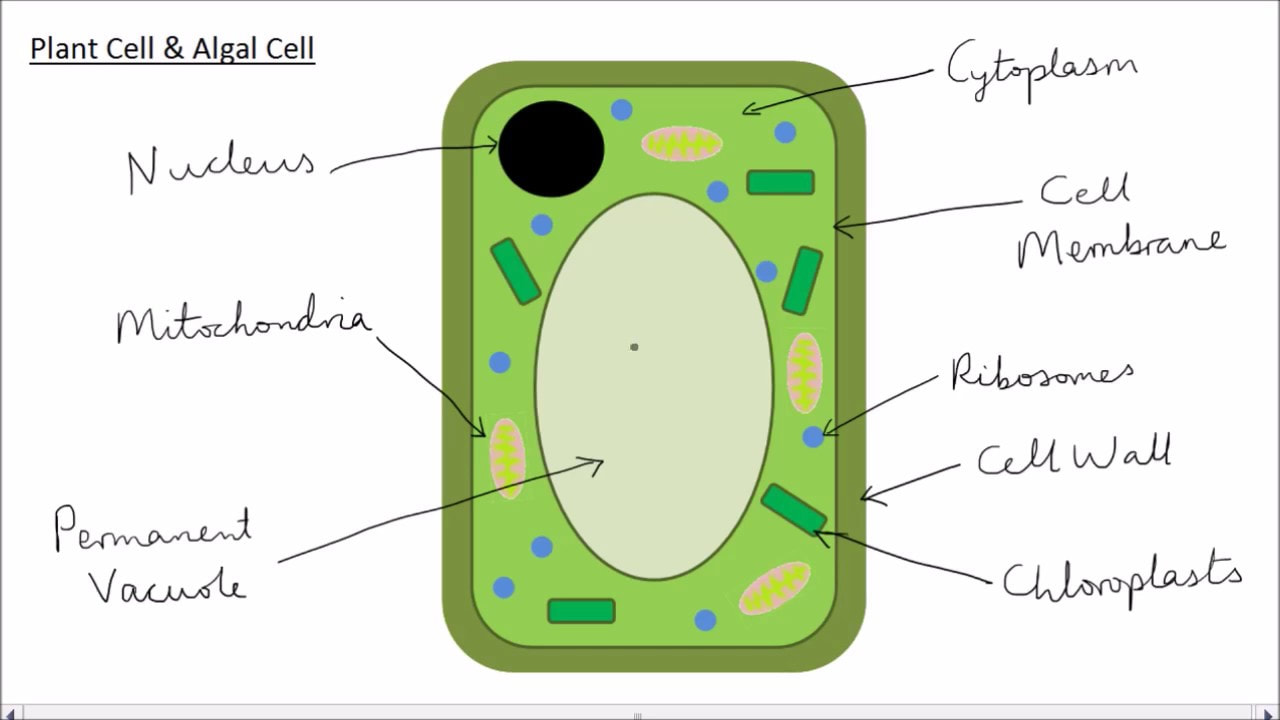 Cell Structures & Function - AG.& ENVIRONMENTAL SCIENCES ...